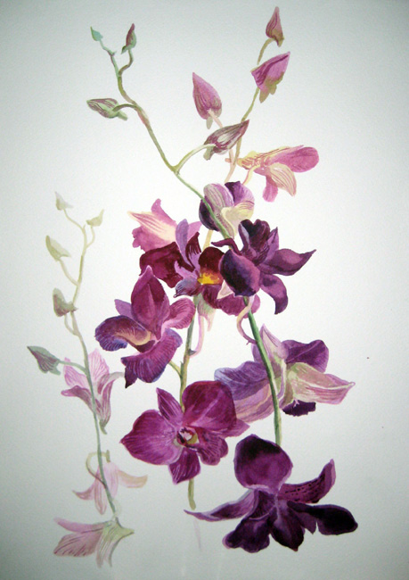 Малиновая орхидея