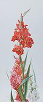 Гладиолус, ботаническая живопись